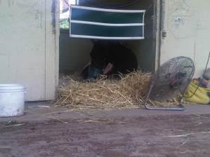 Sleeping in the Detention barn