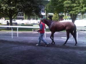 Cory in Belmont paddock