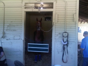 Horse in stall at Belmont