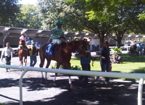 Belmont Park paddock