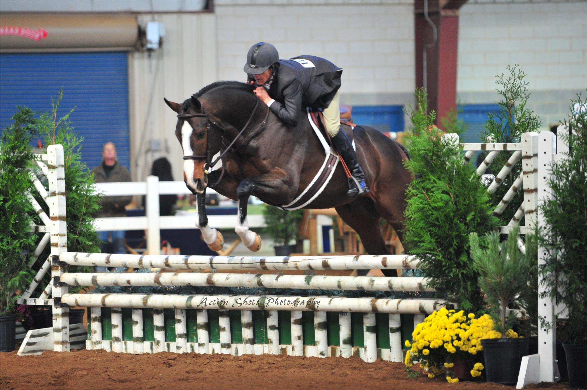 Thoroughbred Horse Shows Retired Racehorse