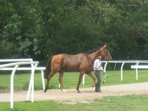 racehorse heading to track