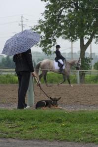 Dressage horse, umbrella, rain