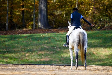 grey thoroughbred, dressage