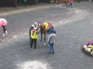 racehorse saddled in paddock