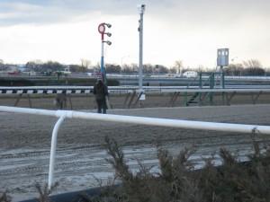 Track vet watching horses