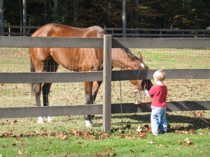 Thoroughbred, OTTB, with child