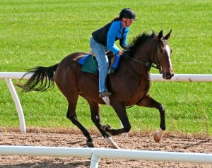 Circuitous gallops on training track for Mosaic Racing Stable