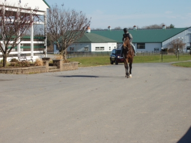Thoroughbred walking at racetrack