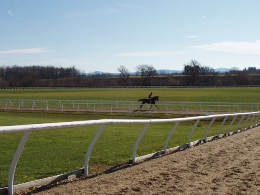 Racehorse galloping at training track