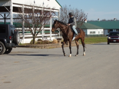 racehorse in training