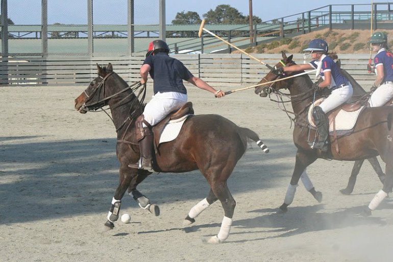 horses polo