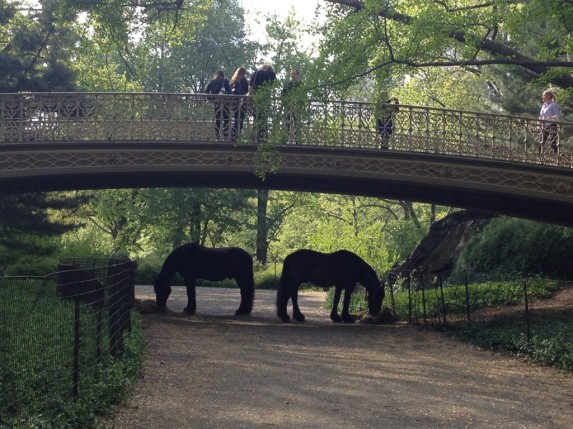 Parks horses taking a hay break, Central Park