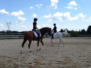 Calvin at the dressage show
