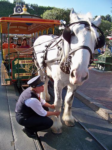 Disneyland horse