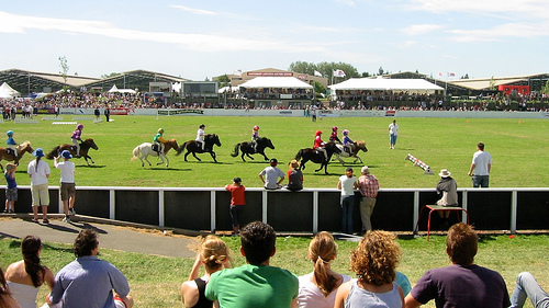 pony racing, New Zealand