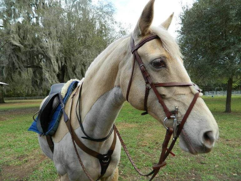 Neck strap on event horse